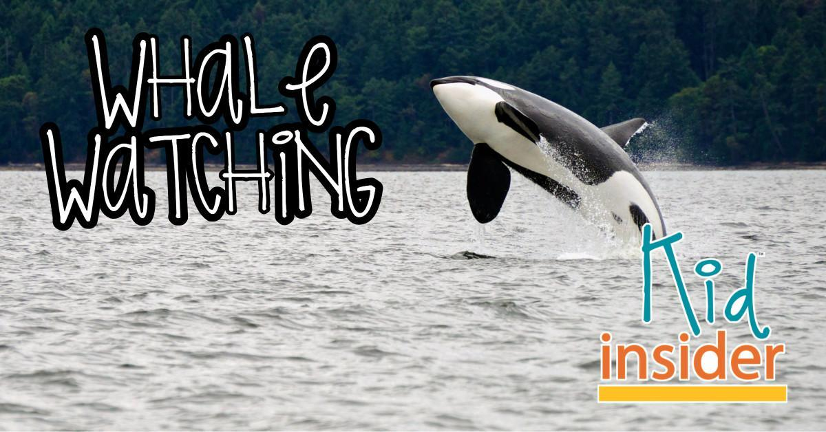 Whale watching in Skagit County, WA
