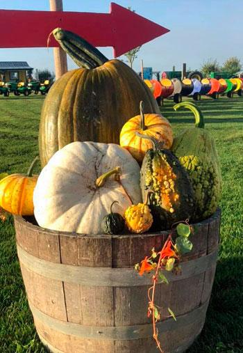 Schuh Farms Pumpkin Patch Mount Vernon WA Skagit Bumpy Gourds