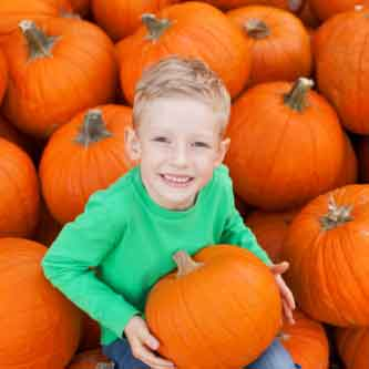 Skagit Pumpkin Patches Related